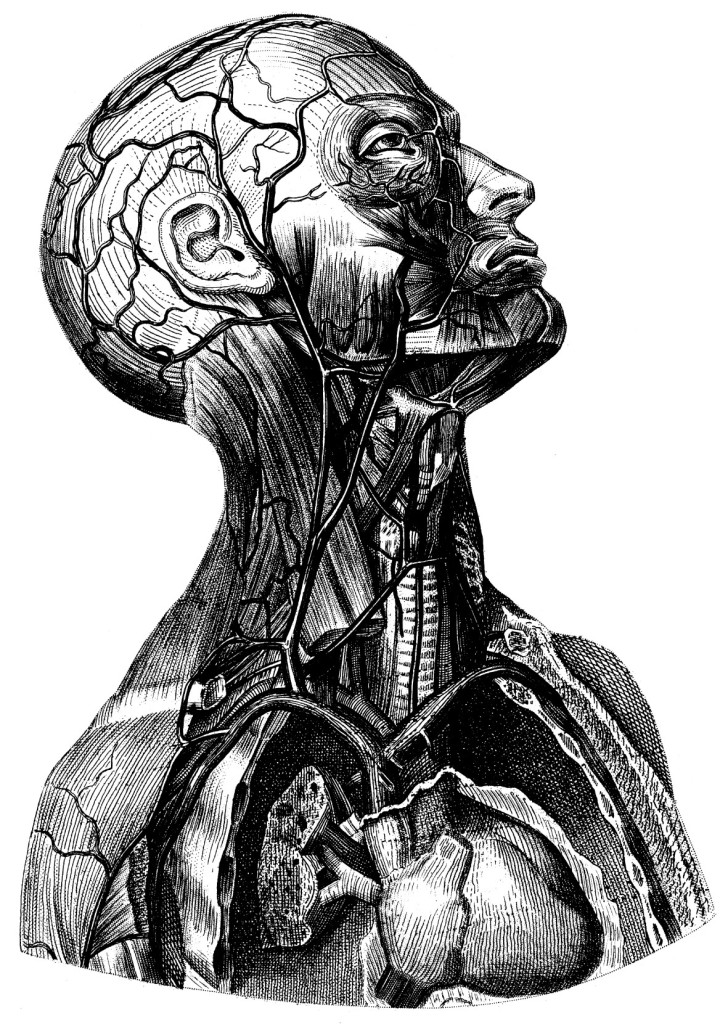 Human-Anatomy-Head-and-Neck-Black-and-White